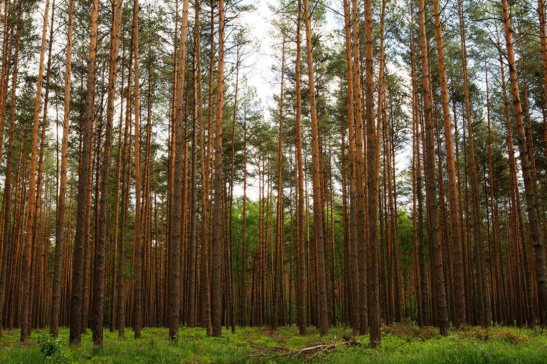 Im Wald bei Lychen